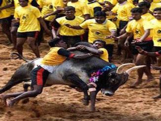 jallikattu tamilnadu gunnise record